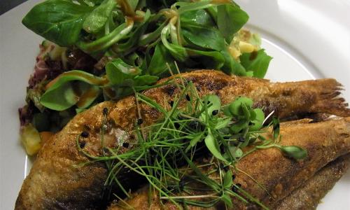 Heringeb Frisch gebratene Heringe aus dem Naturpark Schlei mit Gurkensalat und Bratkartoffeln