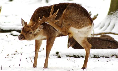 IMGP2347 beitrag Das Winterkleid der Tiere