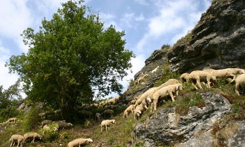 IMG 2079 beitrag Landschaftspflege in Naturparken