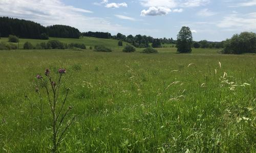 Naturweg Teuschnitz Aue