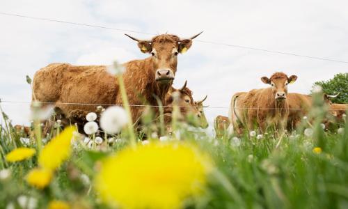 Johann Brunner Rinderzüchter Eisersdorf Daniel Delang 35b Der regionale Bio Rinder Burger   für das gute Gewissen!