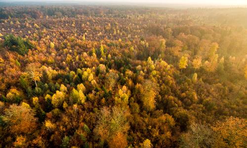 L³▀wald Herbst DK L³neburger Heide 2015 219b Naturpark Südheide