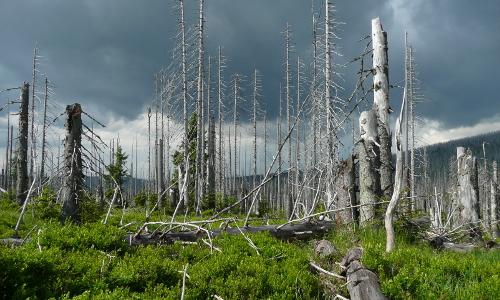 Lusen 265b Goldener Herbst – Waldspaziergang im Naturpark