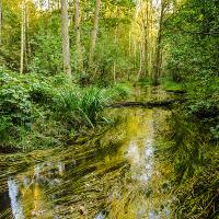 Lutter bei Endeholz © Lüneburger Heide GmbH