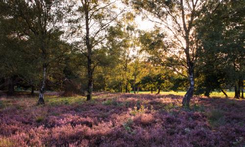 Männige Berge c Holger Leue b Der Weg ist das Ziel: Pilgern und Wandern im Naturpark Hümmling