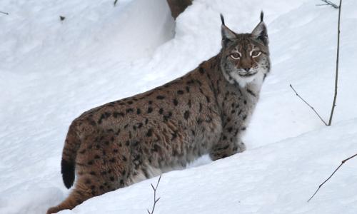 MG 5711 hf beitrag Das Winterkleid der Tiere