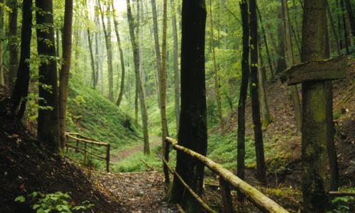 Magdalenenbru¦ênnlein SFb Von der Sonne verwöhnt – Naturpark Frankenhöhe