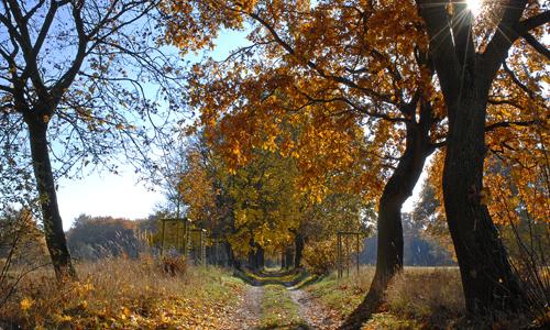 Milchweg Leisten Nossentiner Schwinzer Heide Jörg Gast Weite Wälder, stille Seen ─ Naturpark Nossentiner/Schwinzer Heide