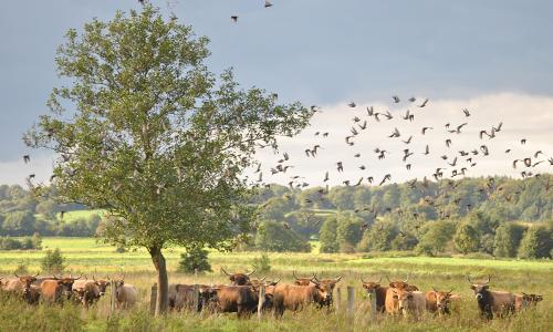 NPA ERNA Vögel Beitrag ERNA Fleisch und Wurst aus dem Landschaftspflegeprojekt von ERNA e.V. im Naturpark Aukrug