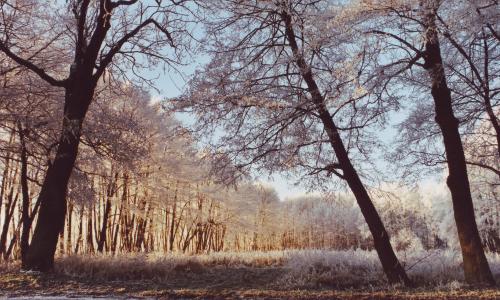 NPF Winter am Gollbogen beitrag  Abwechslung und Ruhe – Naturpark Fläming