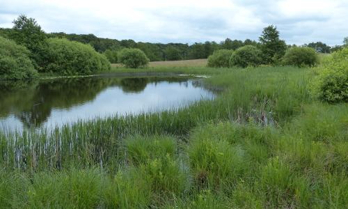 """NSG Upahl Lenzener See Soll am Naturwaldreservat Bohnrath 20 Beitrag1 """"Beispielhaft"""" – Gewässerschutzprojekte in Naturparken"""