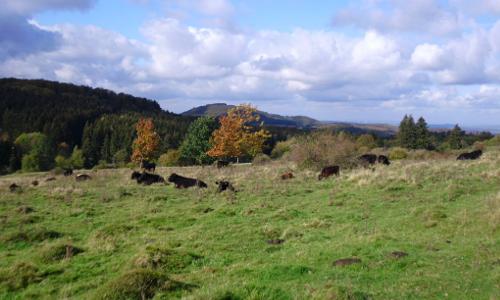 Naturpark Habichtswald LFolchmann Hute Habichtswald Beitrag Im Märchenland der Brüder Grimm – Naturpark Habichtswald
