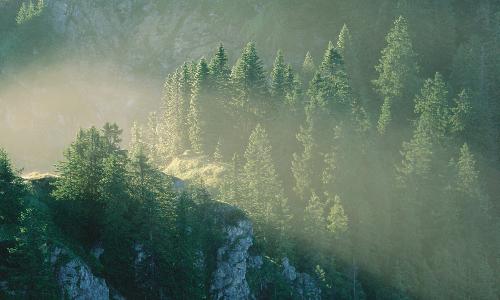 Nebel ueber Wald am Laber Bernd Ritschelbf Naturpark Ammergauer Alpen