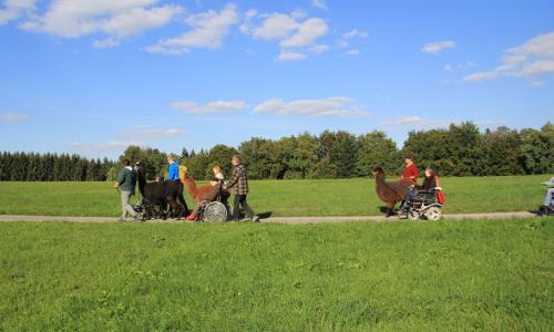 Rollstuhlwanderung mit Lamas c Bernhard Drixler 3b Mit Kind und Kegel – Unterwegs in Naturparken