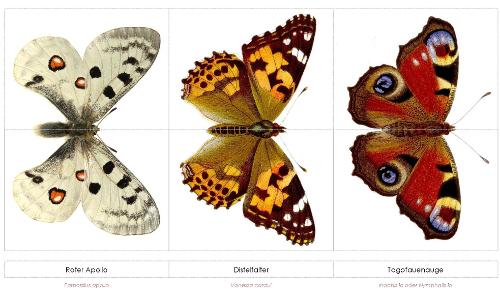 Schmetterlingspuzzle beitrag Spielend Lernen   Schmetterlingspuzzle