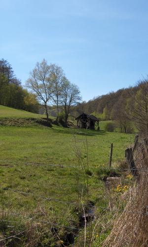 TiefenbachGE ROb Neue Wildnis in der Kellerwald Region gesichert