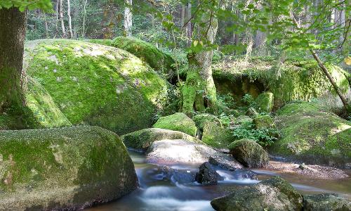 Tourismuszentrum Oberpfälzer Wald Doost B Naturschutzgebiet Doost