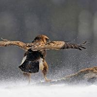 Überleben © VDN / Gernot Blum