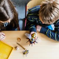 Umweltaktionstage 2018 Naturparkschule Zuesch © VDN / Carolin Lauer