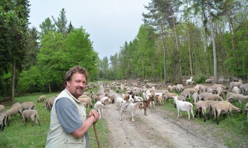 Viehtrift m Tieren u Schäfer red 0218b Wiesen + Weiden, Schutz + Nutzung