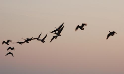 Vogelzugb Naturpark Schlei