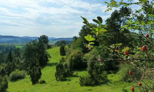 Wacholderhangbeitrag Naturpark Hirschwald   Das grüne Herz der Oberpfalz