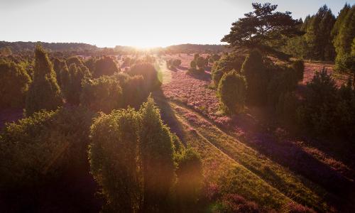 Wacholderwald Luftaufnahmen Suedheide308b Stimmungsvolle Heidelandschaft