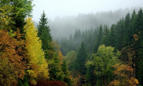 Wald Harz Clausthalb Goldener Herbst – Waldspaziergang im Naturpark