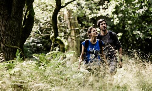 Wandern im Soonwald beitrag Wald, Wein, Wohlfühlen – Naturpark Soonwald Nahe