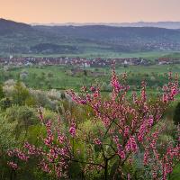 © WernerSchaal Naturpark Schönbuch - Blühende Obstbäume