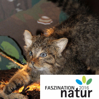 Wildkatzenausstellung - Copyright: Naturpark Stromberg-Heuchelberg