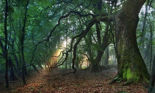 Zauberwald neukl Beitrag Mehr als lauter Bäume – Erlebnisreiche Wälder in Naturparken