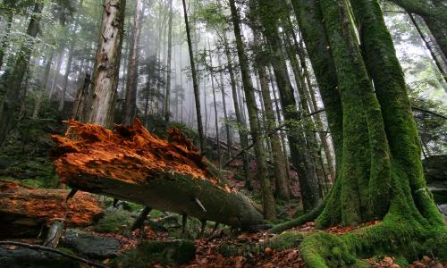 """Zweribachbannwald beitrag """"Neue Potentiale""""   Wildnis in deutschen Naturparken"""