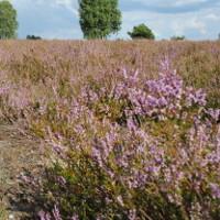 Kyritz-Ruppiner Heide © Dr. Mario Schrumpf