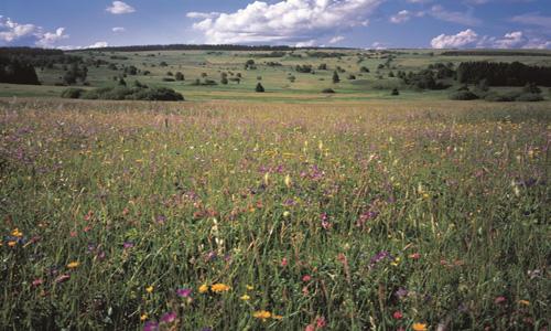 bergwieselr stark verkleinert Kopieb Naturpark Bayerische Rhön