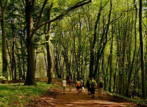 buchenwald 2012 ps passig gemacht 620x453 Wandertag Biologische Vielfalt 2013