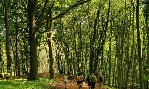 buchenwald np 2b Sieben Berge und mehr – Naturpark Siebengebirge