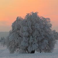 Wintermorgen © VDN / bikender