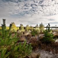 Herbst im Moor©VDN/Roland Perian