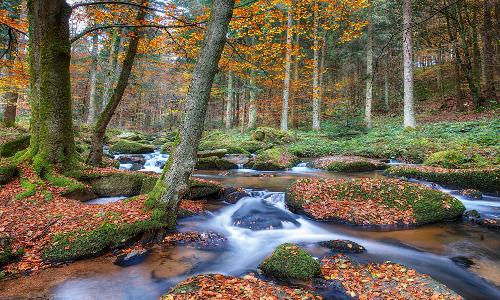 dsc 8714db Goldener Herbst – Waldspaziergang im Naturpark