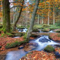 Herbstwald © VDN/Else Krammel