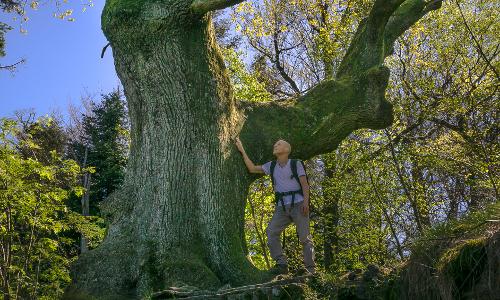 dsc05529 1b Heilkräfte des Waldes – Waldbaden in Naturparken