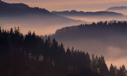 dsc07014 b Mehr als lauter Bäume – Erlebnisreiche Wälder in Naturparken