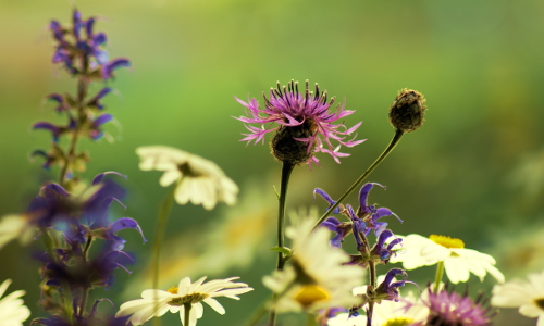 """dsc08052 beitrag """"Dufte Bienen"""" – Bienenschutz in Naturparken"""
