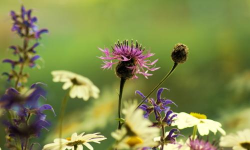 dsc08052b Biologische Vielfalt  Naturschutz beginnt im Garten