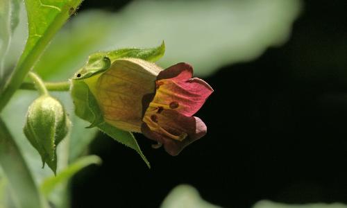 dsc08116 ps 1b Aus der Reihe getanzt   Zauber und Magie der Pflanzen