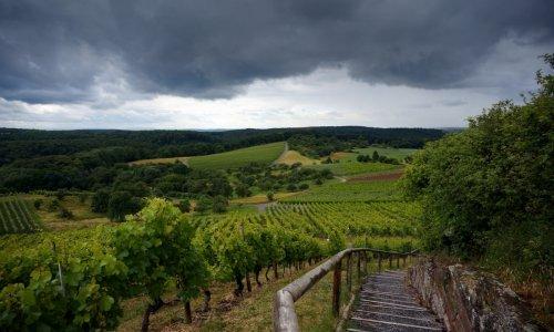 dsc09059 verkleinert Wein. Wald. Wohlfühlen. – Naturpark Stromberg Heuchelberg