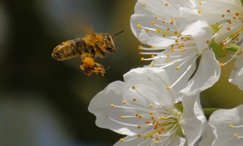 """dsc09897 beitrag """"Dufte Bienen"""" – Bienenschutz in Naturparken"""