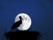 'Mondsüchtig': Copyright: VDN/Gernot Blum