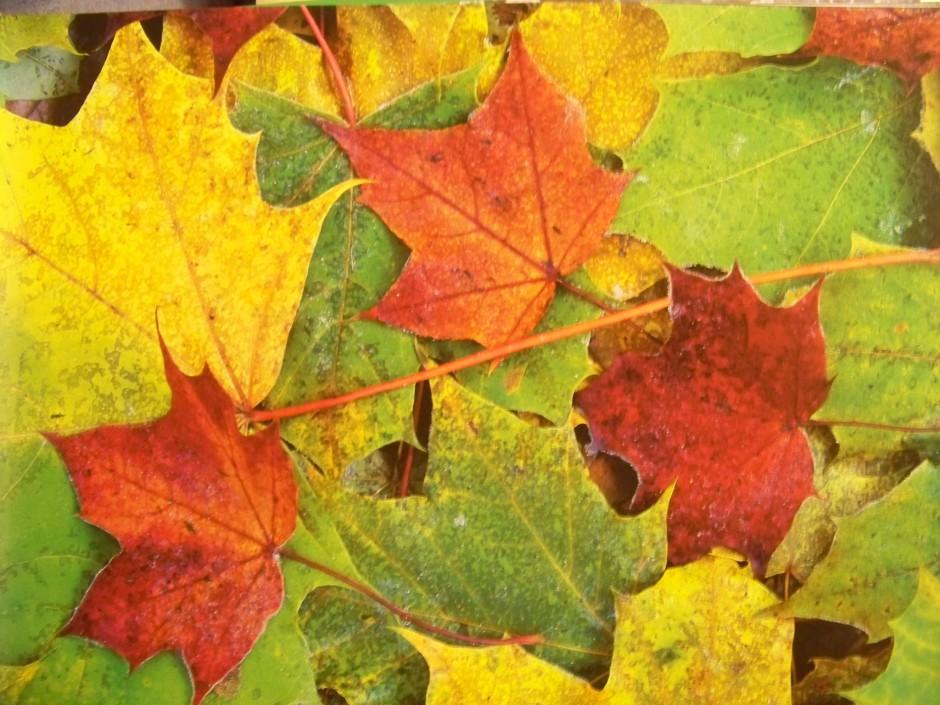 es wird Herbst 940x705 Im Farbrausch der Natur